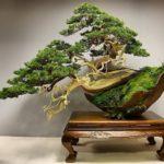 Искусство бонсай: стили,виды,формы,фото,видео, растения для бонсай