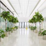 Лучшие комнатные растения которые подойдут для вашего офиса.