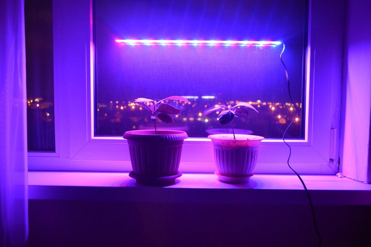 Лампы для подсветки цветков