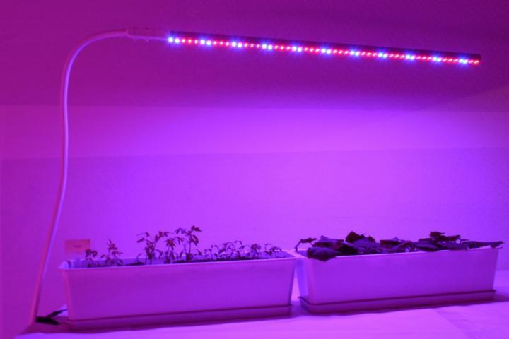 Подсветка комнатных растений фитолампами.