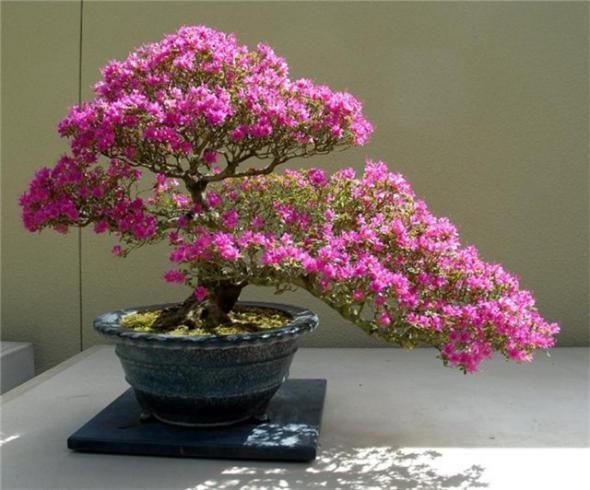 Композиции из растений: бонсай и икебана.