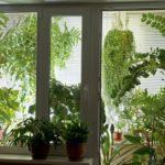 Композиции из растений: оформление окон,виды композиций.