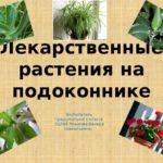 Лекарственные комнатные растения : описание,фото,видео,обзор.