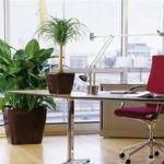 Комнатные растения в кабинете и у компьютера