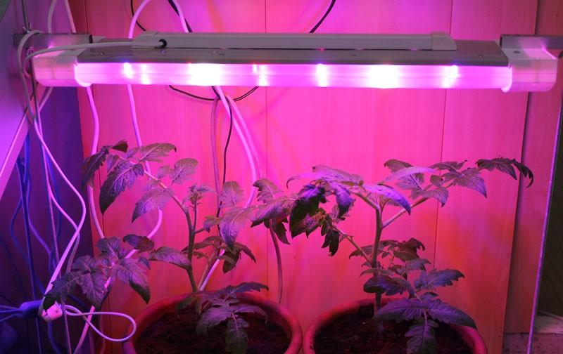 Освещение растений своими руками