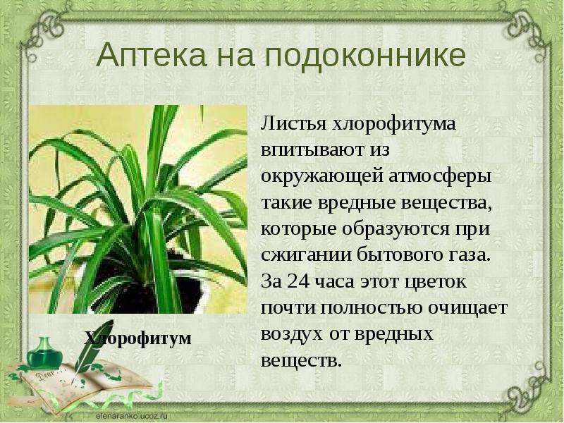 Комнатные цветы и их свойства