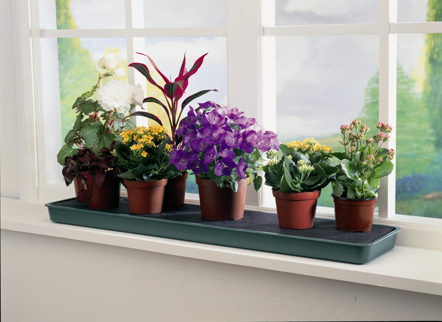Комнатные растения:приметы,суеверия,советы.