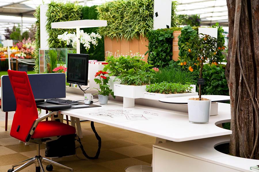 Как правильно озеленить офис?