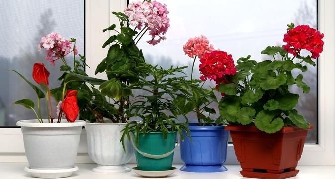 Комнатные растения в нашем доме.