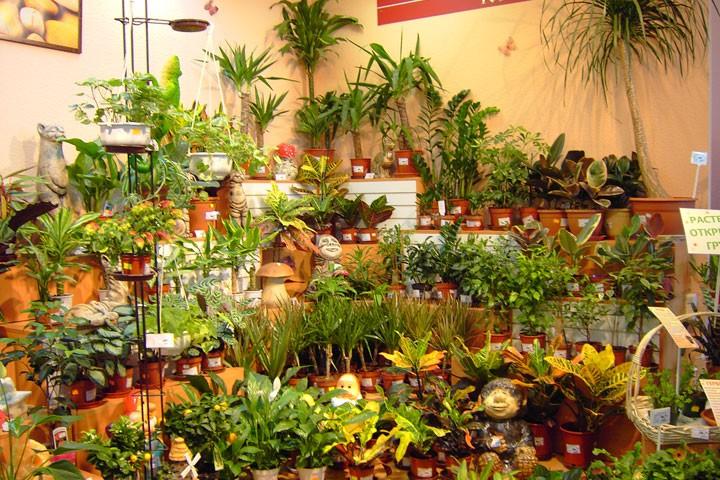Разнообразие комнатных растений