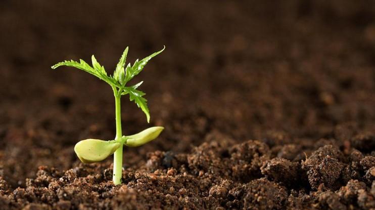 Почва для комнатных растений.