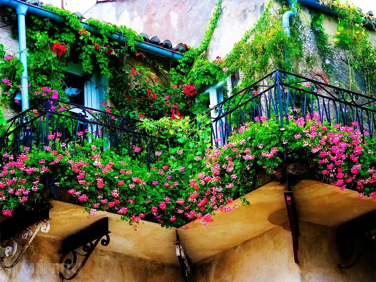 Растения на террасе и балконе.