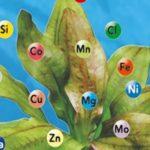 Комнатные растения — нехватка питательных веществ.