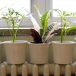 Температурный режим для комнатных растений.