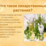 Лечебные свойства лекарственных растений