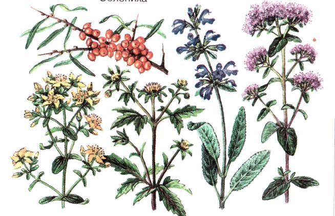 Что нужно знать используя лекарственные растения?