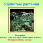 Название и описание ядовитых и вредных растений.