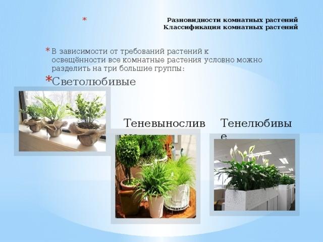 Классификация и виды комнатных растений —  таблица.