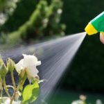 Как защитить комнатные растения от вредителей?