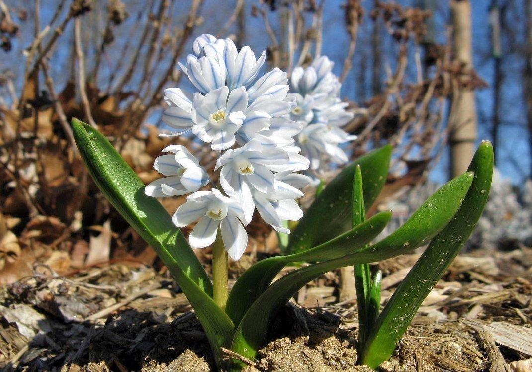 картинки пушкиния цветок живем