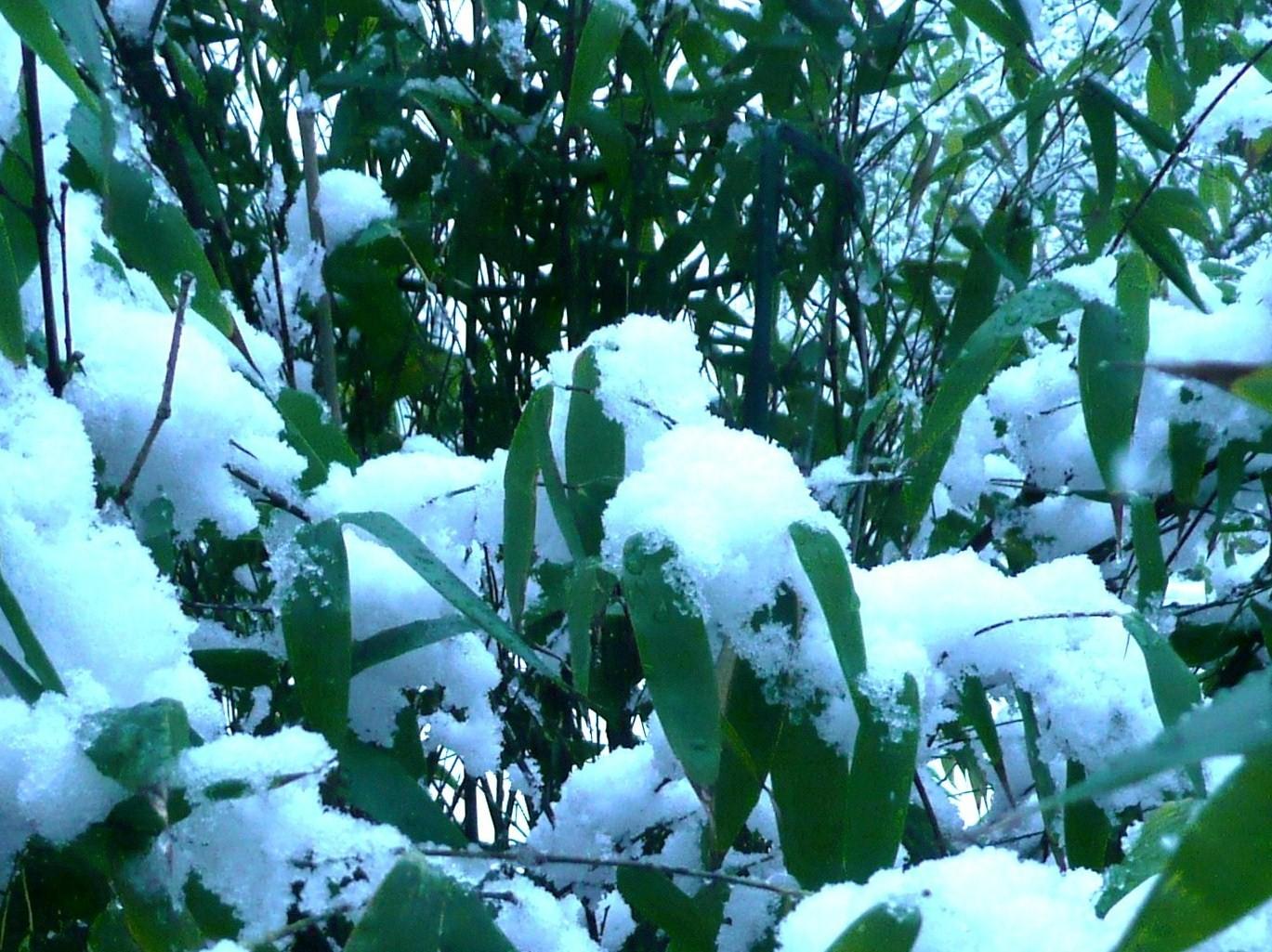 Морозоустойчивость садовых растений
