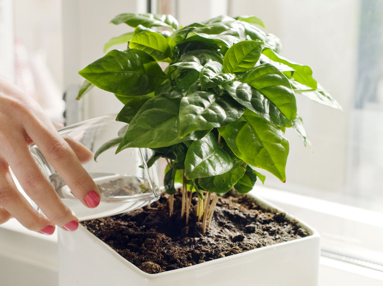 Характеристика комнатных растений
