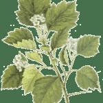 Значение листьев в жизни растений