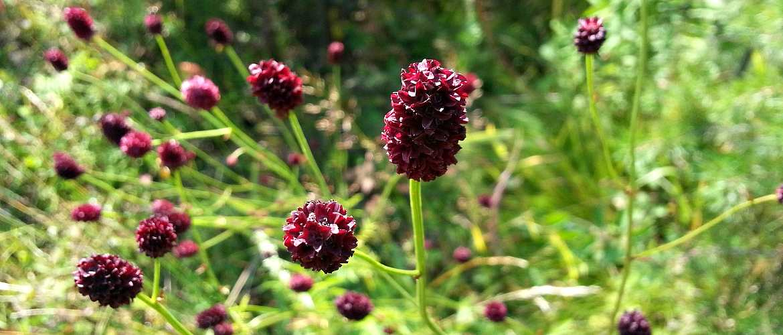 Лекарственные растения: описание,свойства,виды.