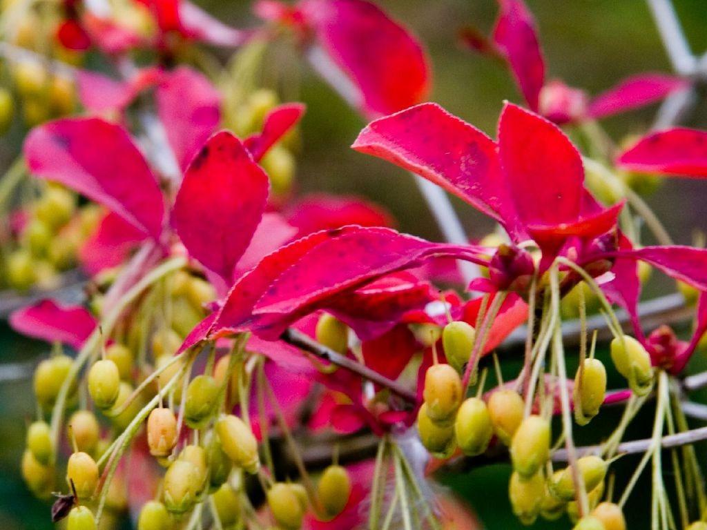 Бересклет: выращивание и уход в открытом грунте.