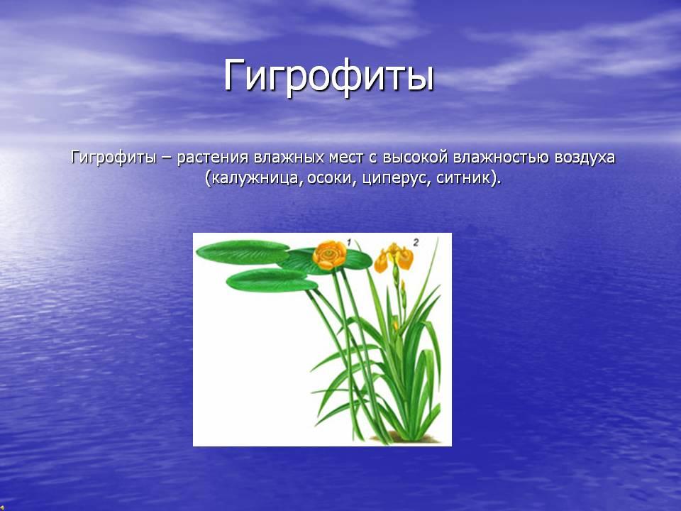 Какие растения являются экологическими.