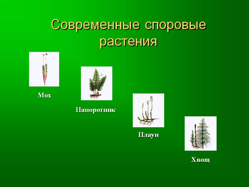 Cпоровые растения — это что?