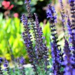 Cтроение растений:описание,фото .