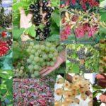 Главные виды плодово-ягодных растений
