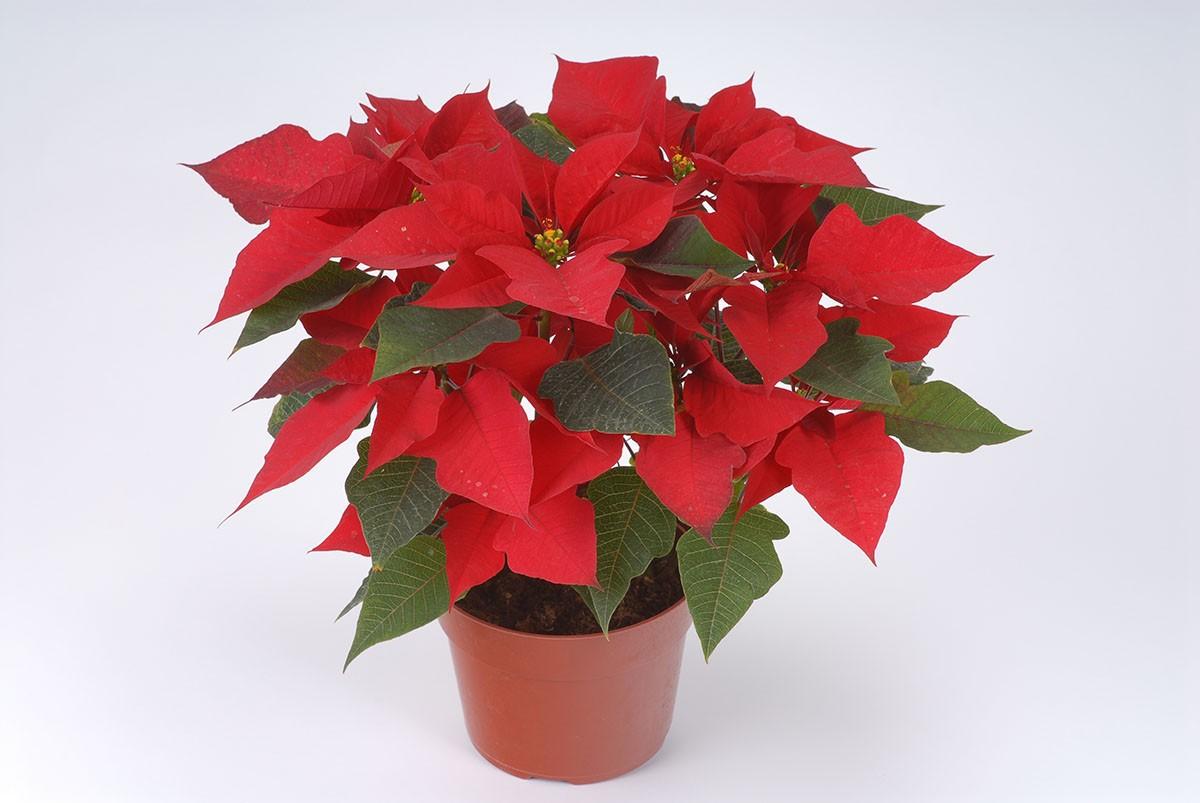 Как выращивать домашние растения осенью и зимой?