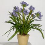 Как правильно удобрять комнатные растения