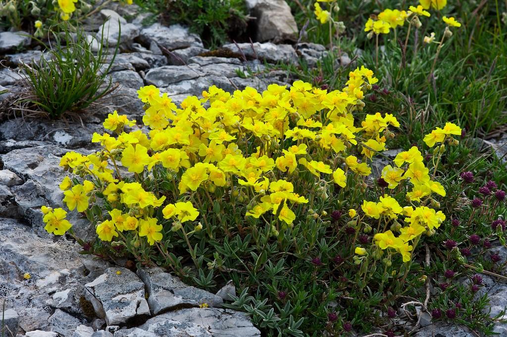 кусок изображения солнцецвет цветы фото особенность пресное