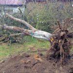 Как правильно удалять деревья?