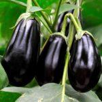 Овощные растения для сада и дачи