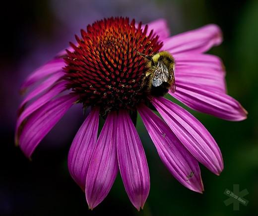 48 Красивых фотографий цветов