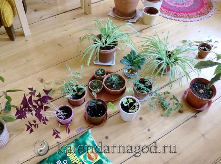 Лунный календарь — о посадке, обрезке, поливе растений в помещении