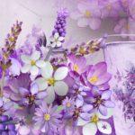 Лаванда:фото,уход,выращивание,описание,посадка