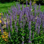 Какая температуры воздуха является критической для садовых растений
