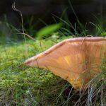 Как вырастить грибы в саду или на даче
