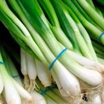 Выращивание зеленого лука — какой сорт лучше выбрать