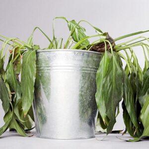 Почему листья антуриума чернеют: причины, методы лечения и профилактика