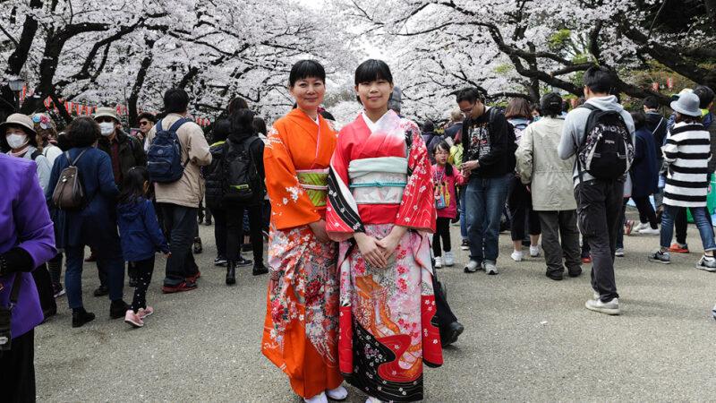 Цветение Вишневого дерева или Сакура в Японии