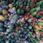 Прекрасные фотографии леса — 21 фото