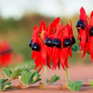 30 Самых редких и интересных цветов в мире