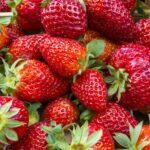10 секретов хорошего урожая клубники на 2020 год