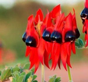 30 Самых редких цветов в мире